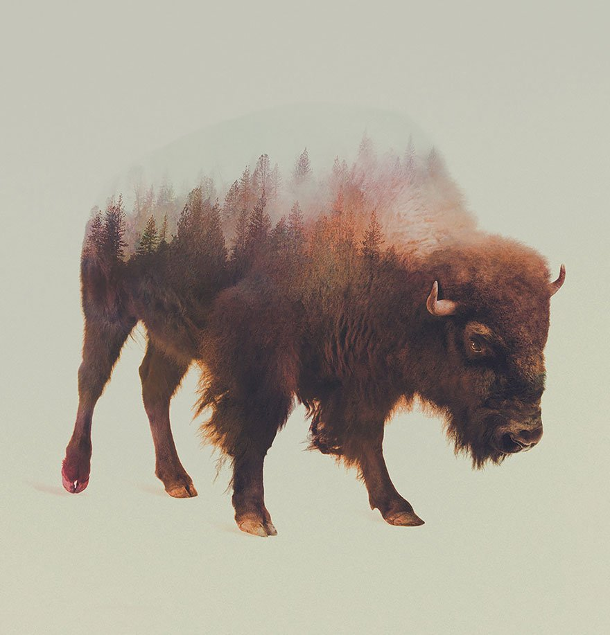 double-exposure-animal-photography-andreas-lie-10__880.